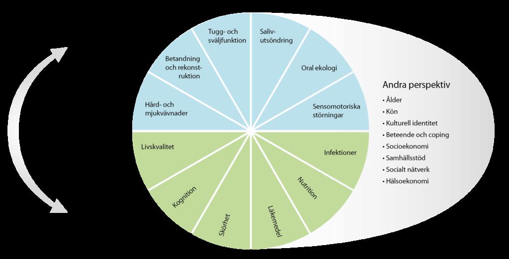 Bilden visar ACT:s algoritm. Bilden är formad som ett pajdiagram för att visualisera ACT‐projektens individuella profil. Den presenterar ACT projektets balans mellan orala och generella hälsoaspekter. Diagrammet är uppdelat i två delar, där en övre delensbitar är markerat i blått och är relaterade till oral hälsa och funktion. Bland ämnena finns Håd- och mjukvävnad, Oral ekologi och sensomotoriska störningar. Den nedre halvans delar är markerade i grönt och är relaterade till allmän hälsa och funktion. Bland ämnena finns Livskvalitet, kognition, läkemedel och skörhet. Algoritmen beskriver också andra betydelsefulla perspektiv. Till exempel är det moderna samhället multikulturellt med ökande mångfald. Patienterna och deras familj, andra släktingar samt vårdgivare kan ha mycket olika bakgrund. Det finns därför ett uppenbart behov av djupare kunskap om den kulturella identitetens betydelse för oral hälsa hos äldre. Vidare föreligger en stark trend att äldre människor lever längre i eget boende och att institutionalisering inträffar mycket sent i livet.